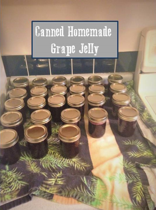 Canned Grape Jelly Pic