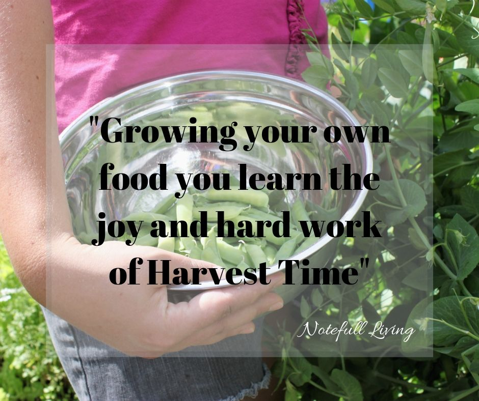 _Growing your own vegetables never looses it's value_